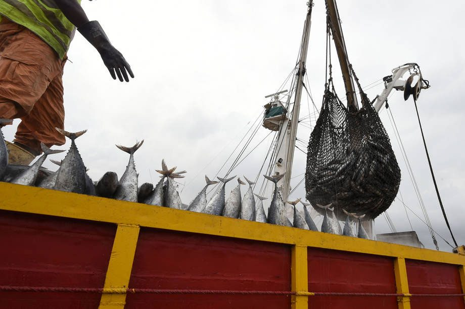 Photo: Offloading tuna in Côte d'Ivoire at Abidjan's main port. Photo: FAO/Sia Kambou