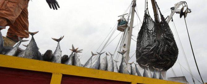 Photo: Offloading tuna in Côte d'Ivoire at Abidjan's main port. Photo: FAO/Sia Kambou