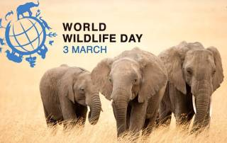 World-Wildlife-Day-3-March