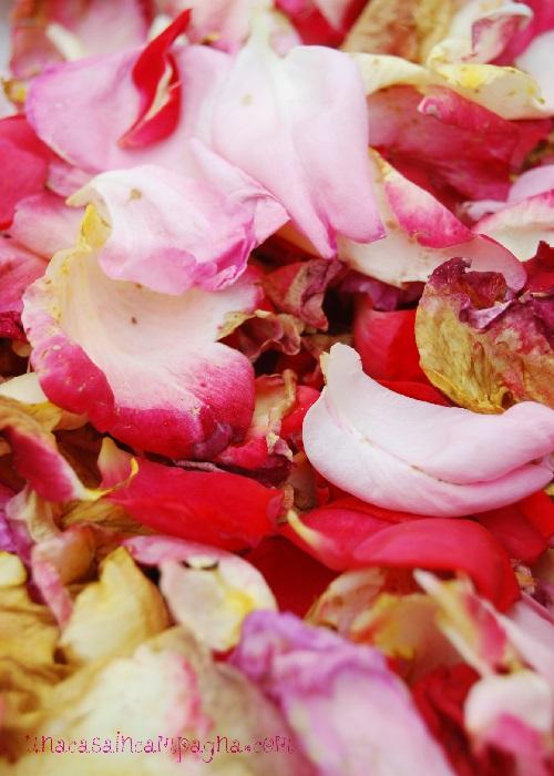 B5-te-ai-petali-di-rosa