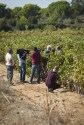 Marco Simonit ai Signori del Vino - Una casa in campagna Blog Alessandra Colaci