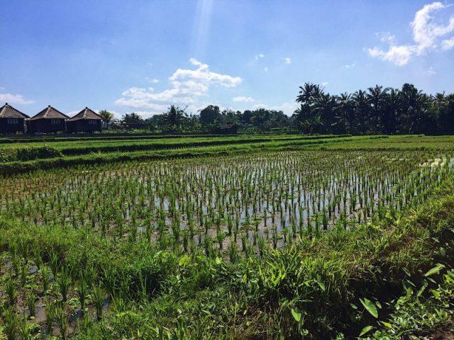 La vista dalla mia camera solo Villas Bali