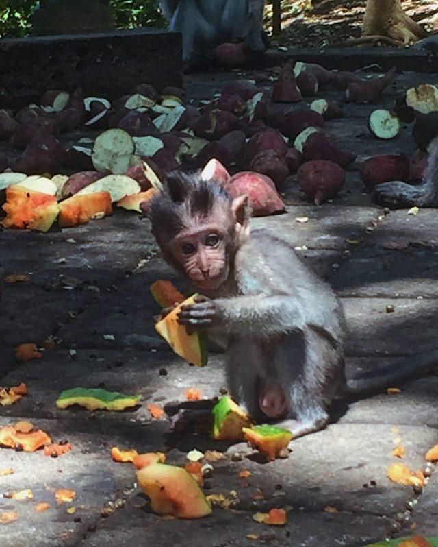 Cucciolo di scimmia Monkey sacred Forest