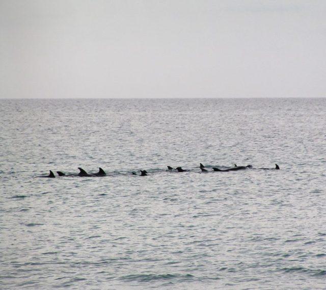 Capo Verde delfini Praia De Chavez
