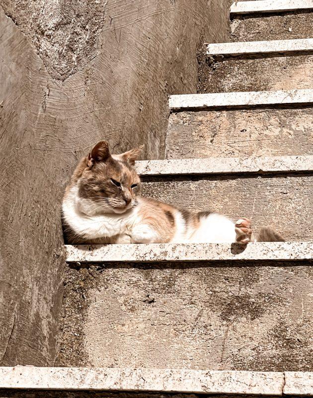 Gatto Calcata Vecchia