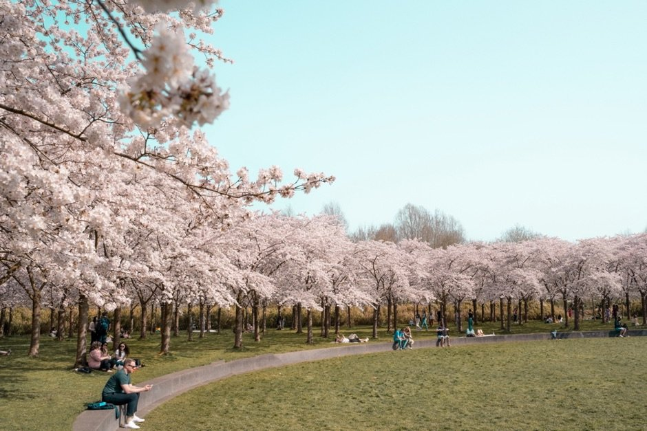 Sakura Amsterdam