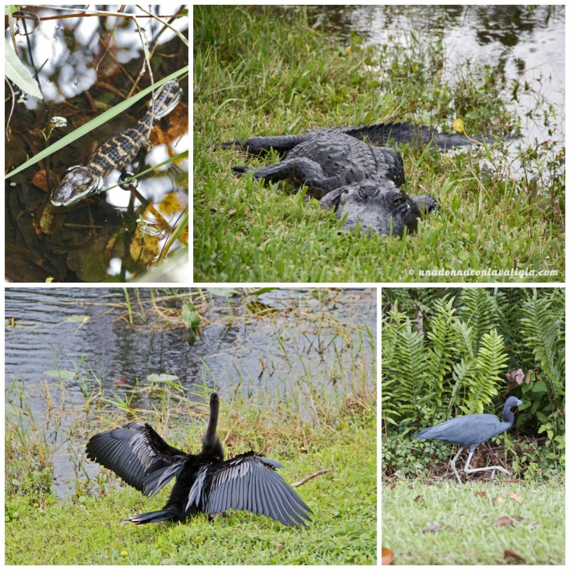 everglades-animals