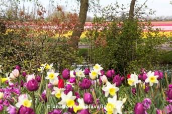 Fiori e campi fioriti