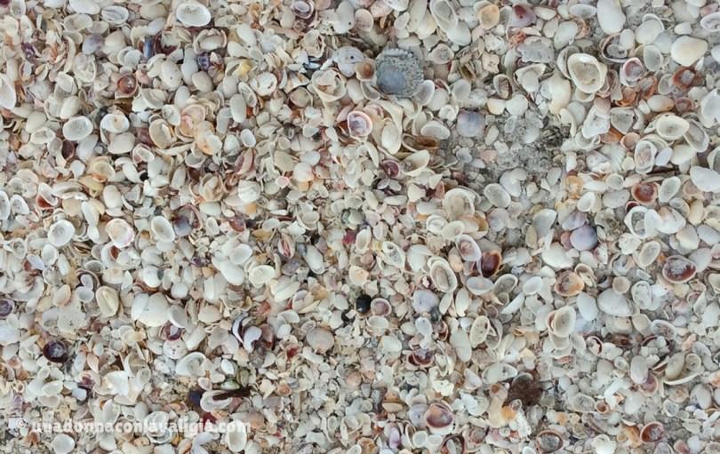 sanibel florida spiaggia conchifglie