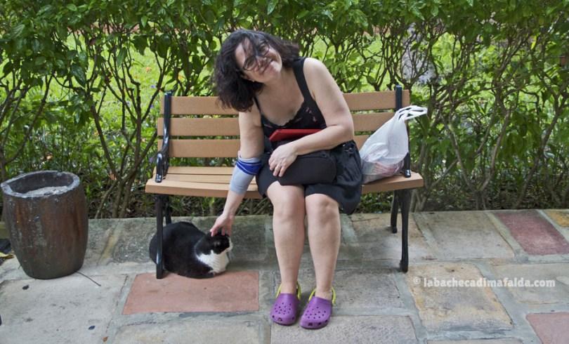 gatto-casa-hemingway-keywest