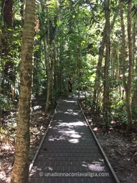 Dubuji boardwalk: facile passeggiata nella foresta tropicale