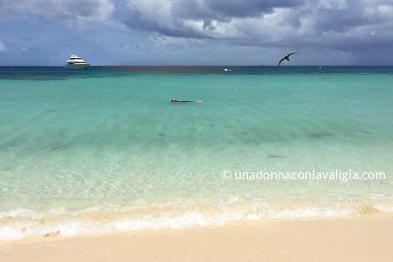 Snorkeling grande barriera corallina michalemas cay