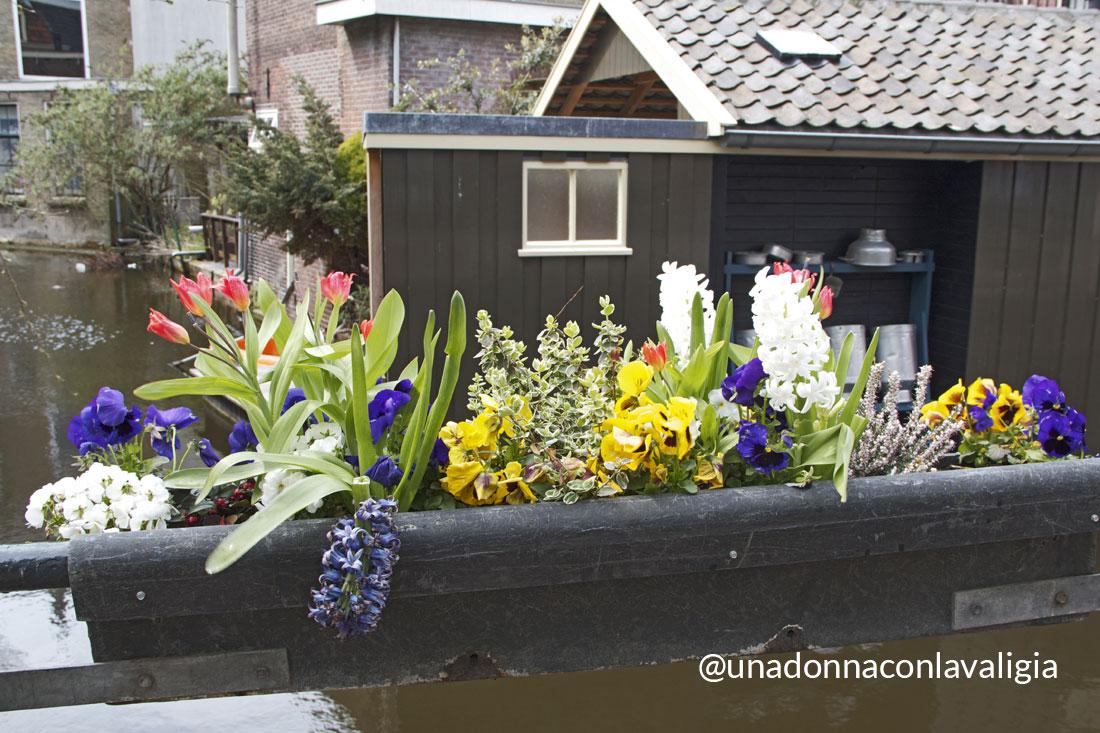 fiori per le strade di Gouda