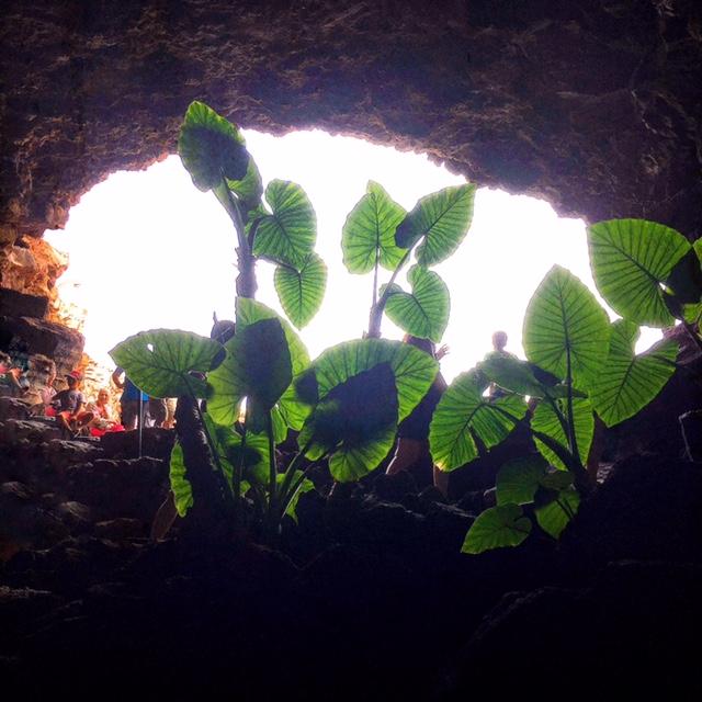 Cueva de los Verdes ingresso