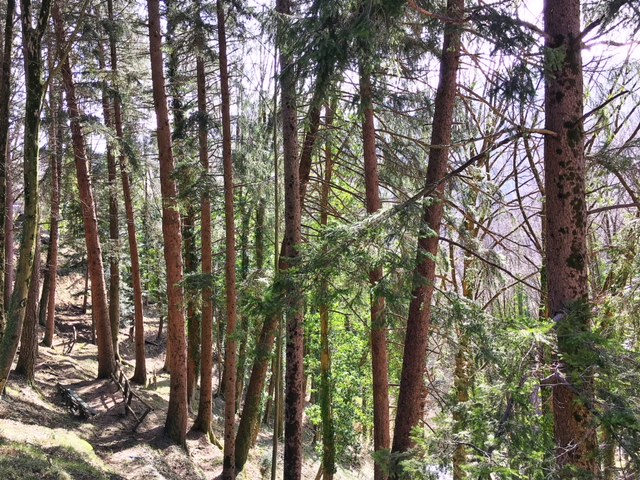bosco di Cutigliano