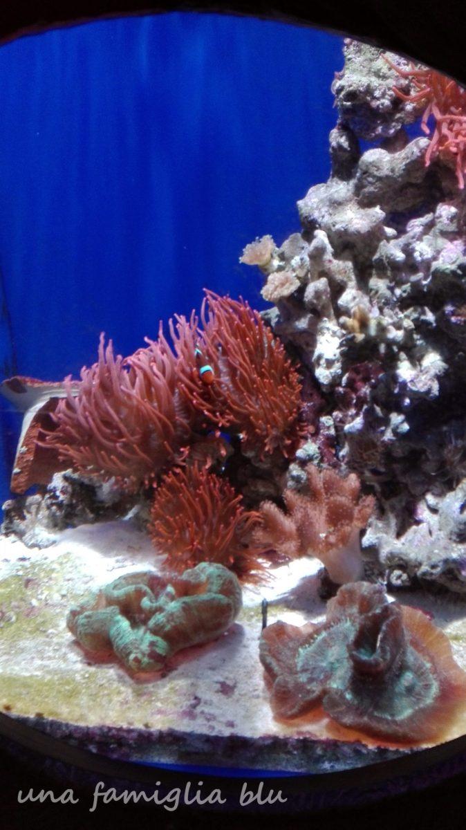 Sea Life di Jesolo con bambini, un pomeriggio all'acquario
