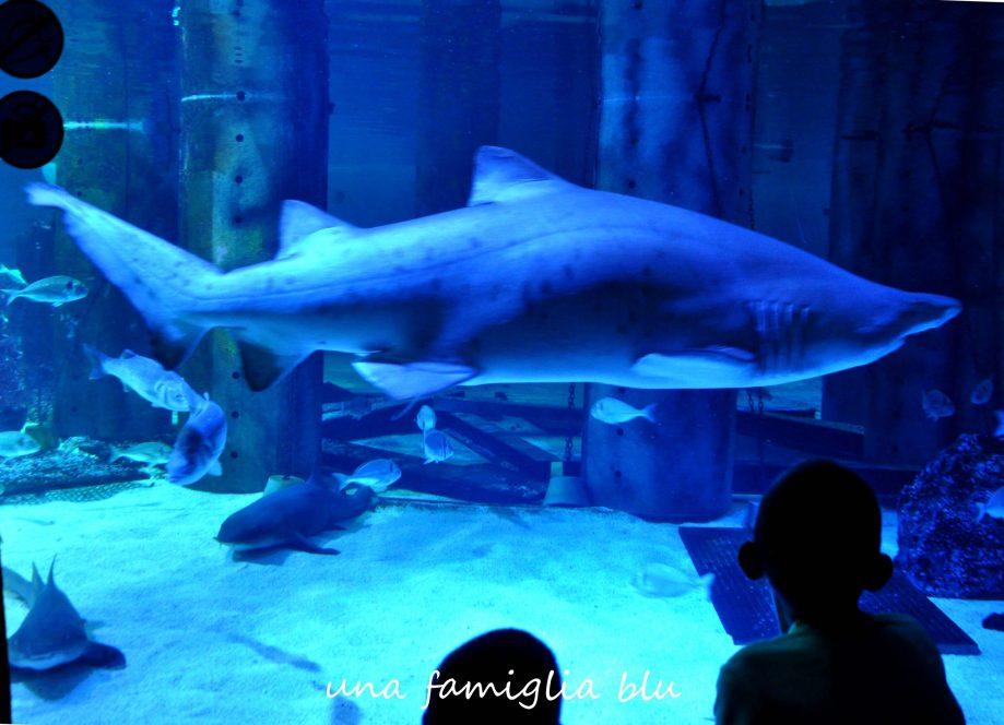squalo acquario cattolica
