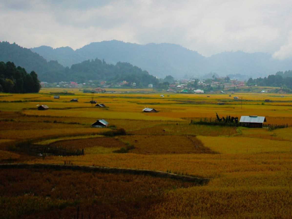 Where to see rice paddies in northeast India and what is pisciculture farming?