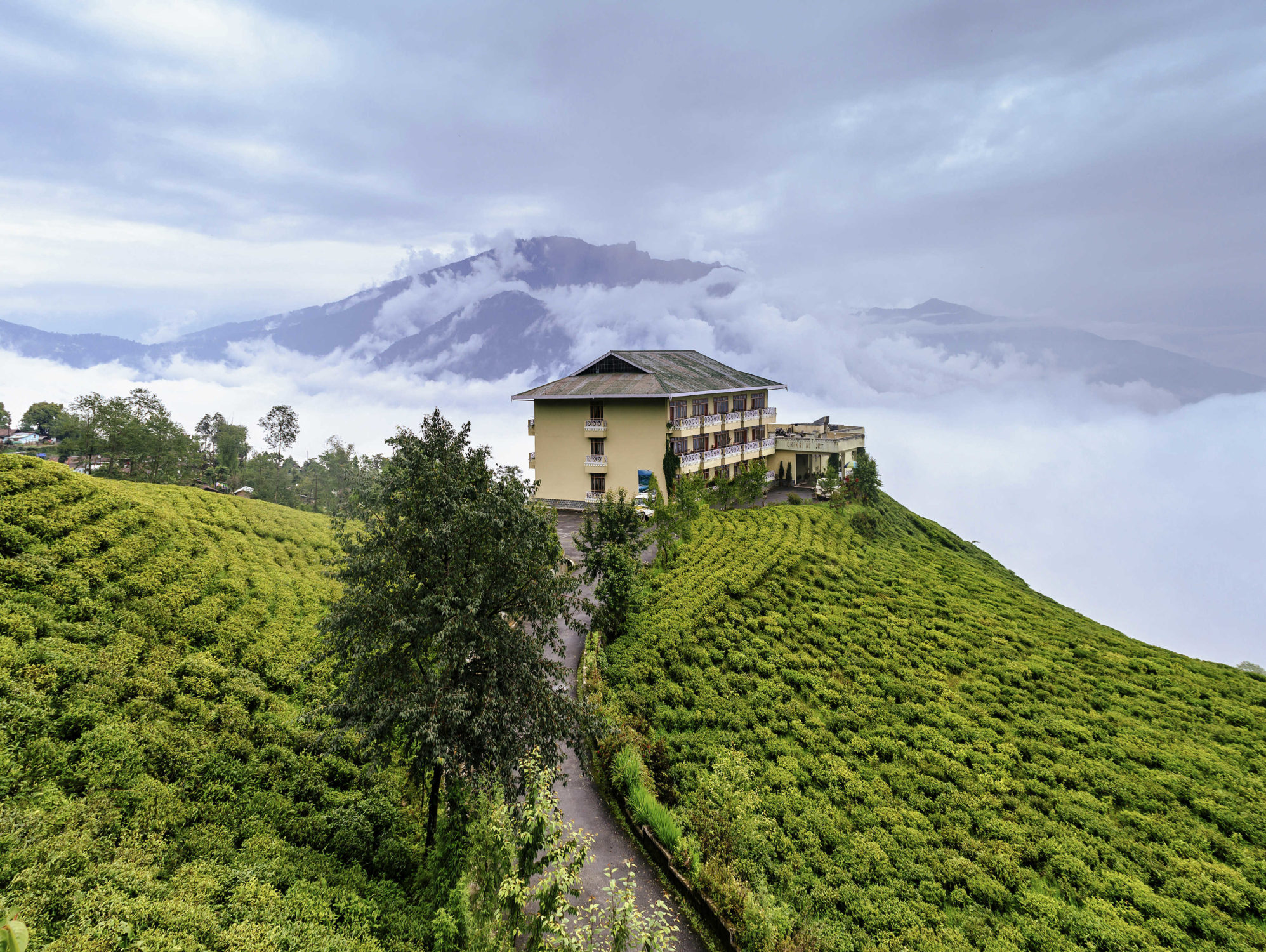What are some quick facts about Temi Tea Gardens in Sikkim in northeast India?