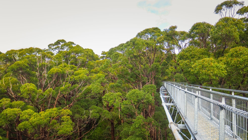 Valley of the Giants Tree Top Walk en Australie-Occidentale