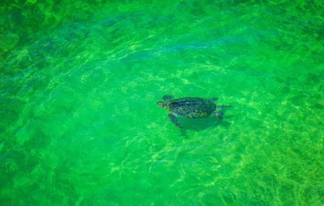 Tortue à Fraser Island