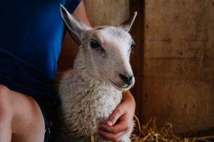 Debemos-procurar-el-bienestar-de-los-Animales-2-UNAMGlobalR