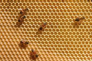 Veneno-de-abeja-UNAMGlobal