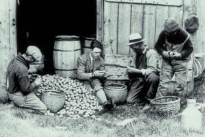 sbucciare patate
