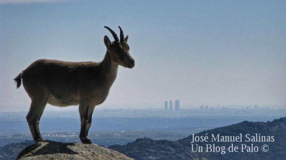 Vistas de Madrid desde lo alto de la región
