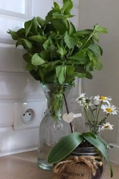 bouquet de menthe