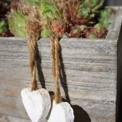 Joubarbes avec des petits coeurs en bois