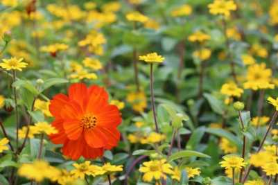 Fleurs Giverny