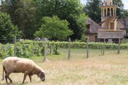 animaux du hameau