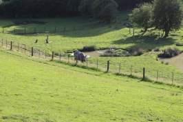vue et rhinoceros