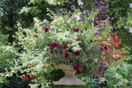 Vase au jardin des plantes de Coutances