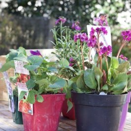 création du mini-jardin