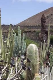 Jardin des cactus sur l'île de Lanzarote