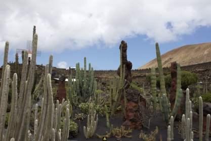 Jardin des cactus à Lanzarote