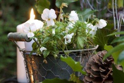 Mon jardin transformé pour accueillir Noël dans une ambiance un brin shabby chic