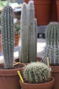 Cactus cierges et globulaires