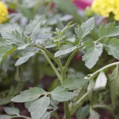 Plantations de printemps