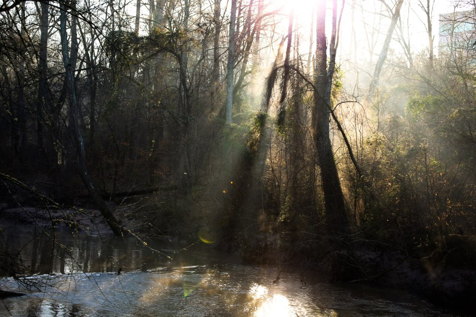Streaming sunlight.. one of the best parts of the morning.