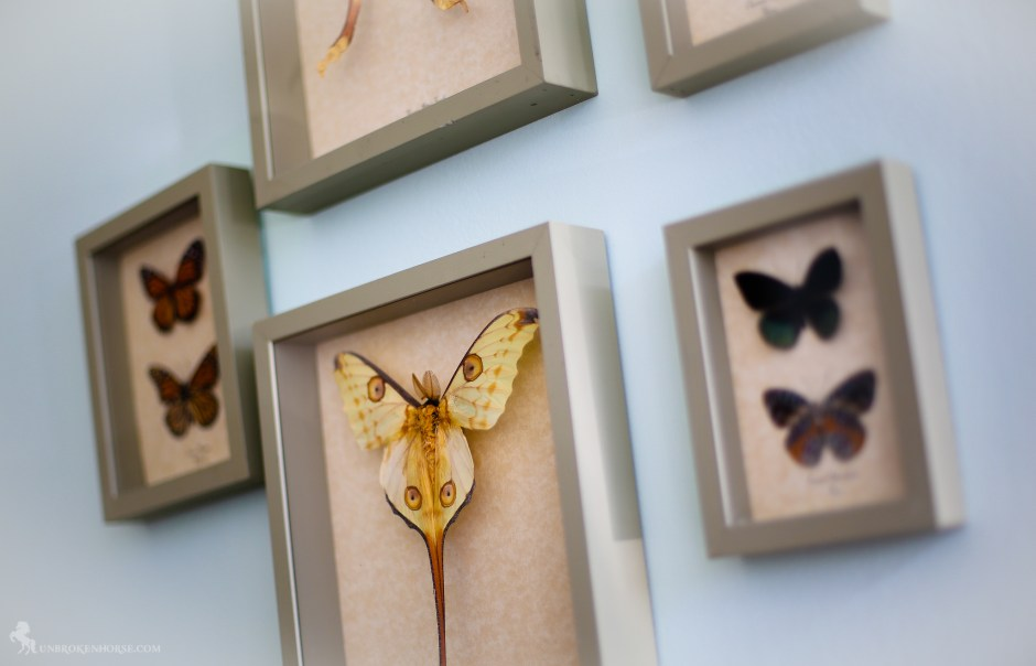 I loved these mounted butterflies