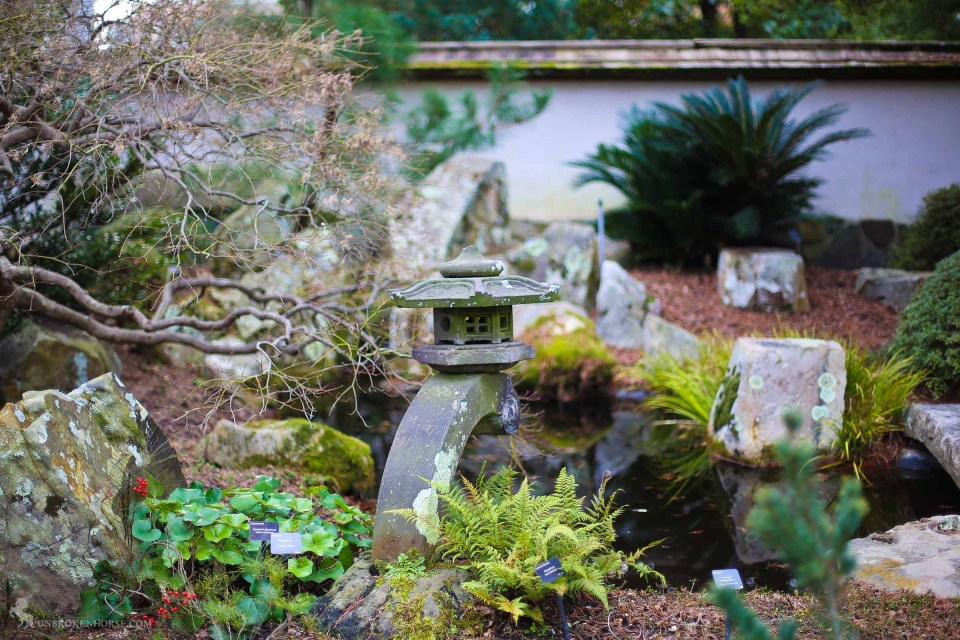 Even in winter, the japanese garden is a self contained little isle of garden magic.