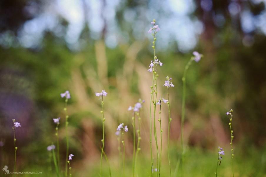 Sweet little purple flowers.