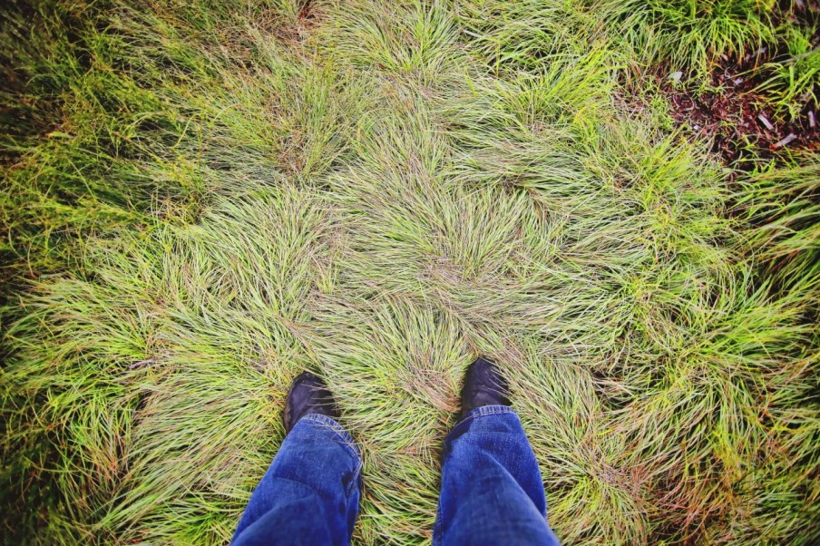 Windblown, rain shaped grasses on top.