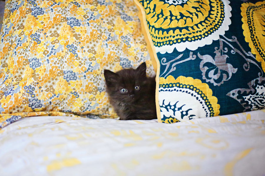 kitten_01