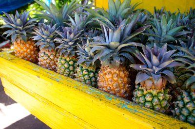 Taste of the Caribbean: Antigua Black, World's Sweetest ...
