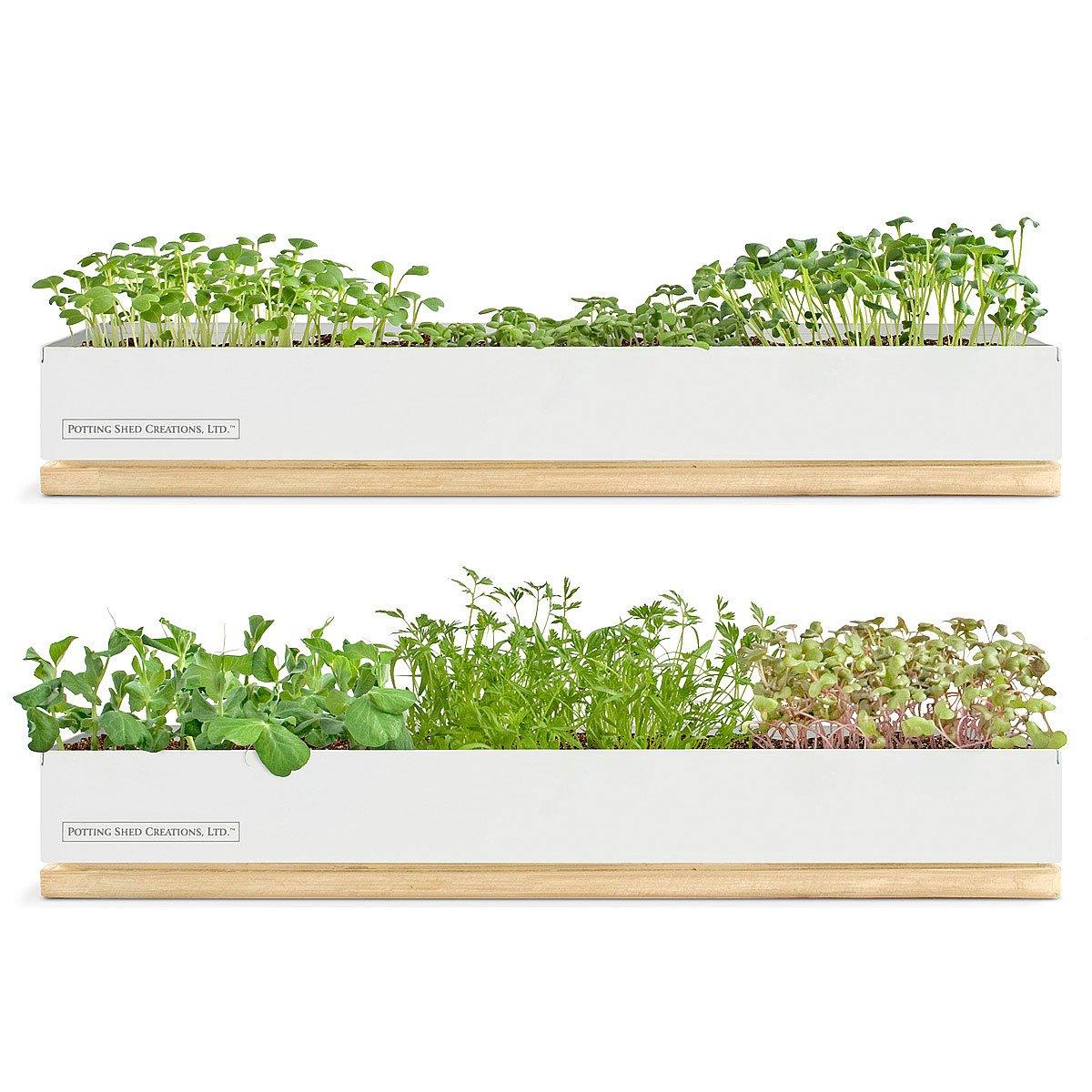 Planter Carrot Tiny Seed