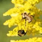 Uncompromising Faith - Patient Endurance - Bees